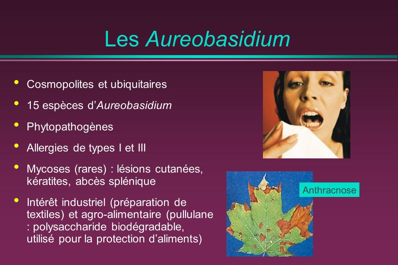 Les Aureobasidium Cosmopolites et ubiquitaires