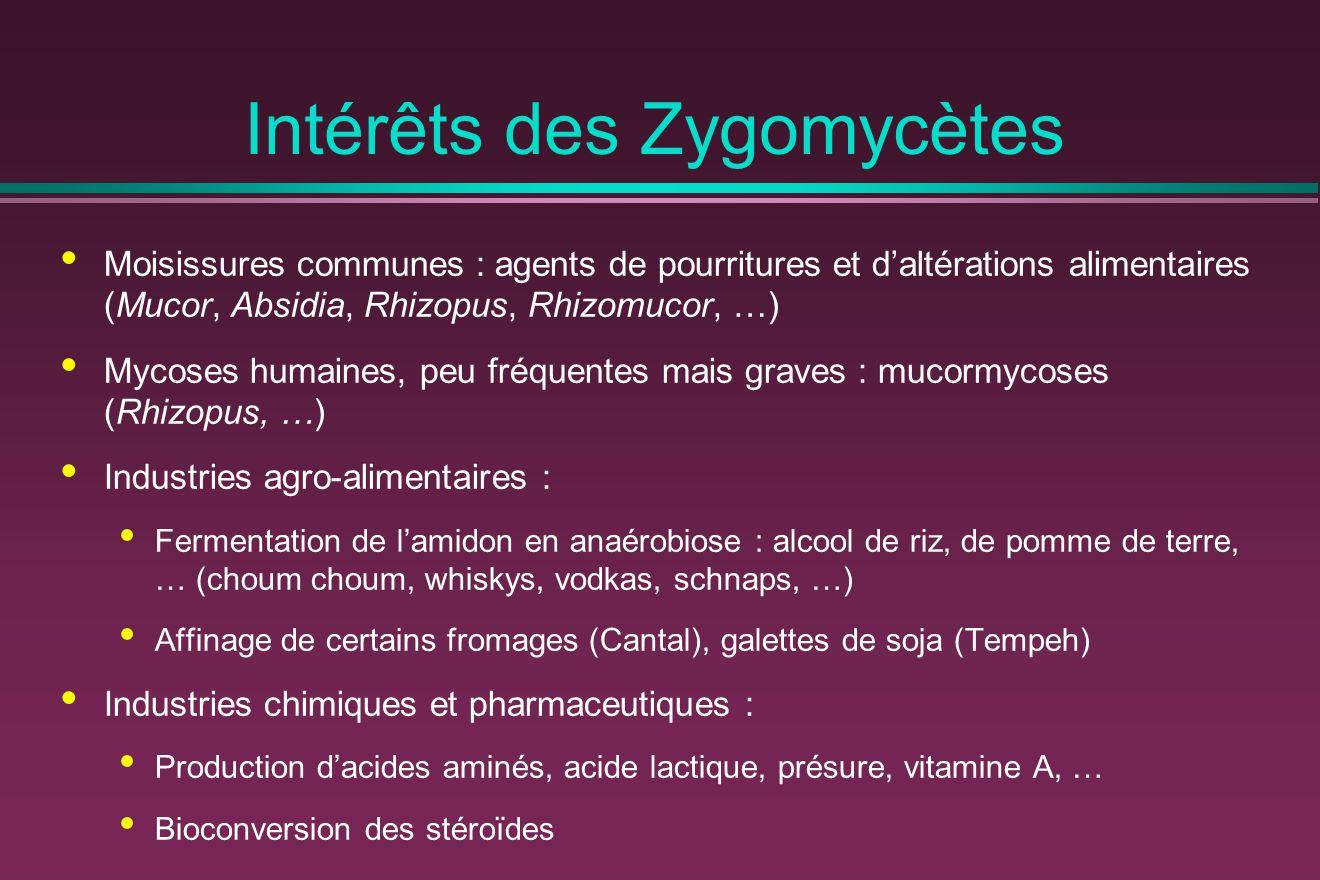 Intérêts des Zygomycètes