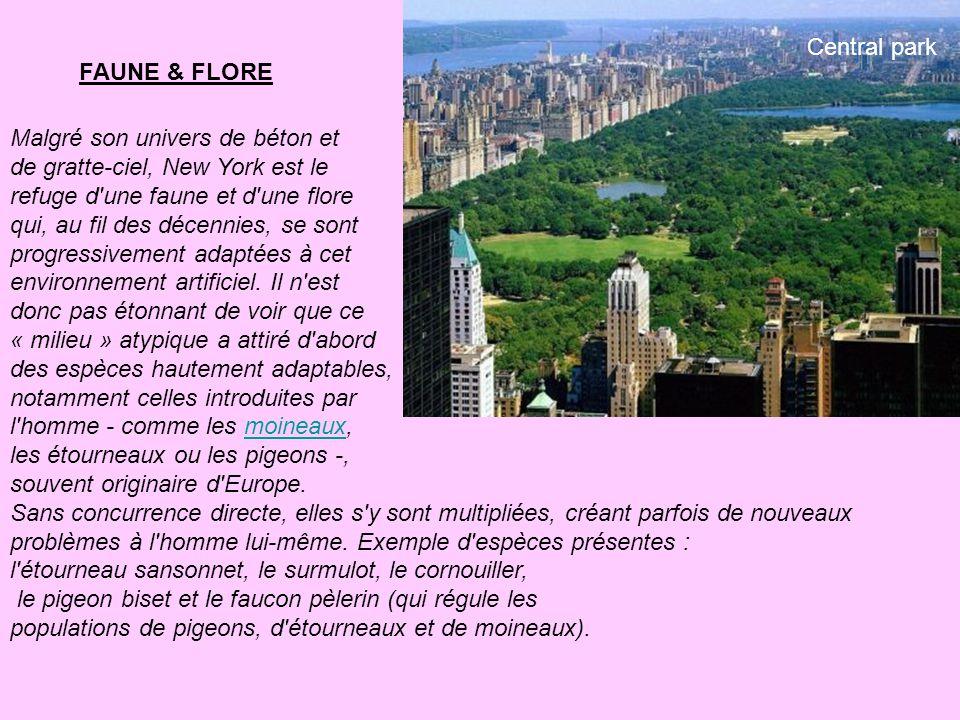 Central park FAUNE & FLORE. Malgré son univers de béton et. de gratte-ciel, New York est le. refuge d une faune et d une flore.