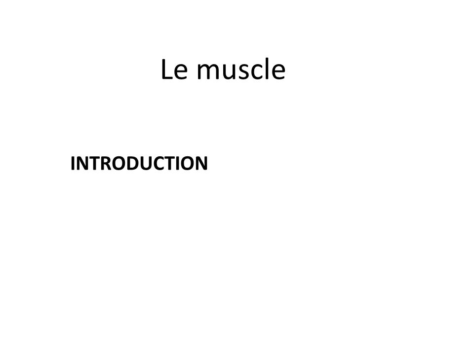 Le muscle INTRODUCTION