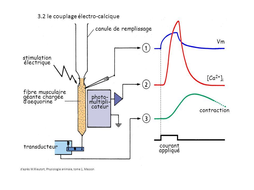 3.2 le couplage électro-calcique