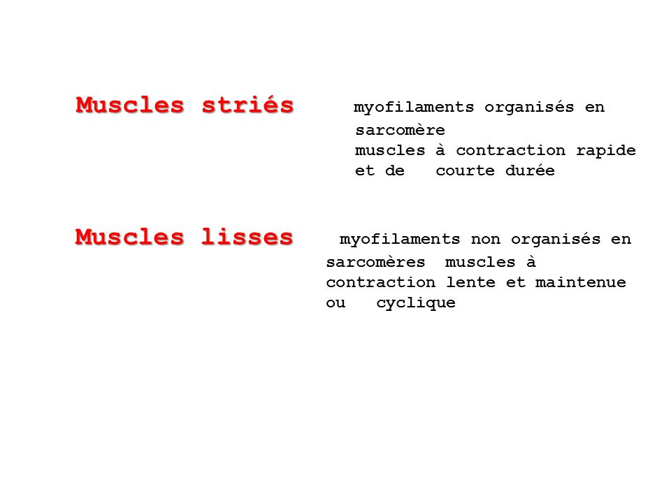 Muscles striés myofilaments organisés en muscles à contraction rapide
