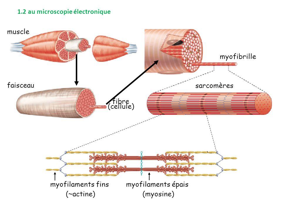 1.2 au microscopie électronique