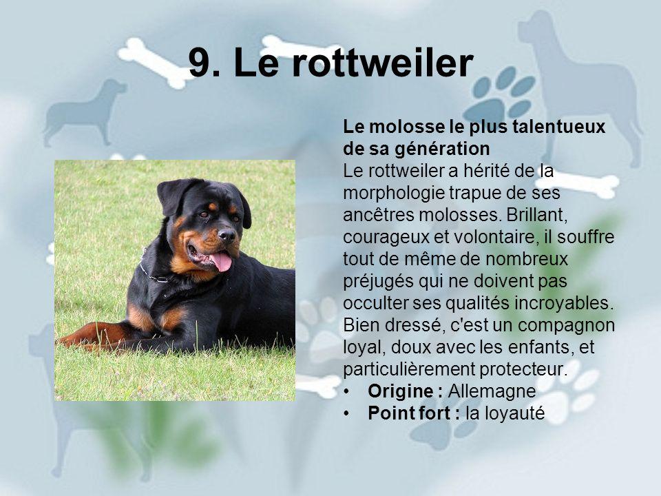 9. Le rottweiler Le molosse le plus talentueux de sa génération