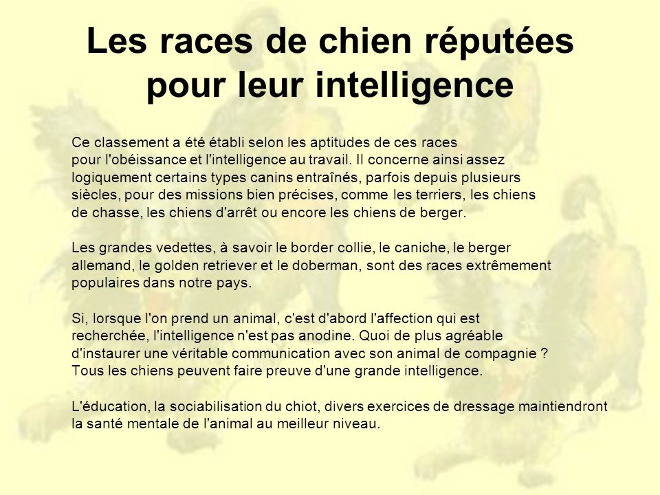 Les races de chien réputées pour leur intelligence