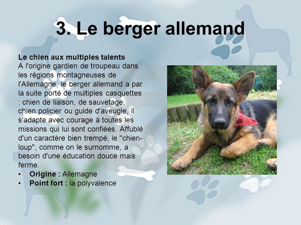 3. Le berger allemand Le chien aux multiples talents