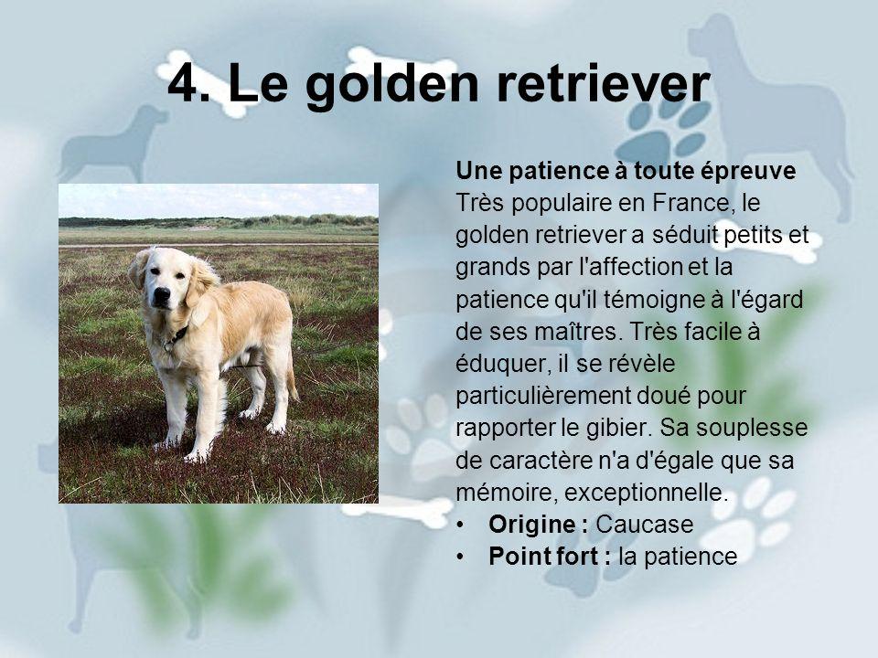 4. Le golden retriever Une patience à toute épreuve