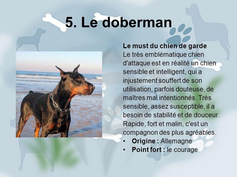 5. Le doberman Le must du chien de garde Le très emblématique chien