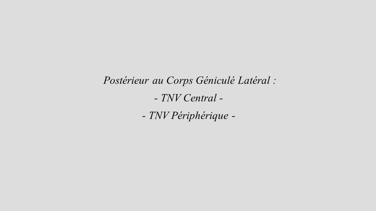 Postérieur au Corps Géniculé Latéral :
