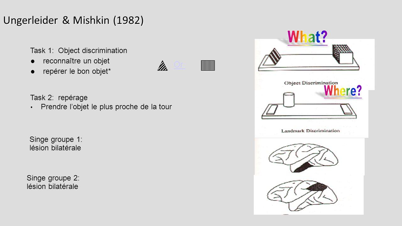 Ungerleider & Mishkin (1982)