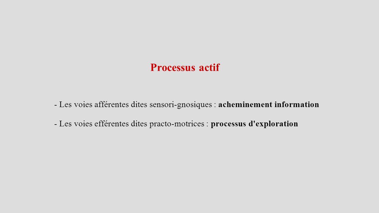 Processus actif - Les voies afférentes dites sensori-gnosiques : acheminement information - Les voies efférentes dites practo-motrices : processus d exploration