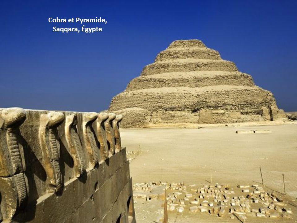 Cobra et Pyramide, Saqqara, Égypte