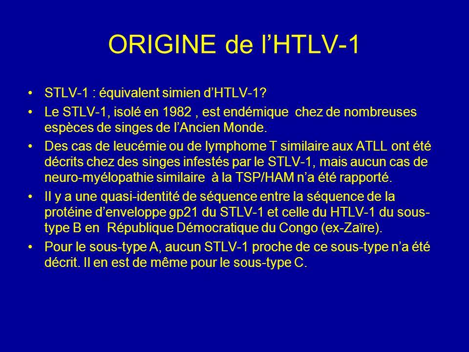 ORIGINE de l'HTLV-1 STLV-1 : équivalent simien d'HTLV-1