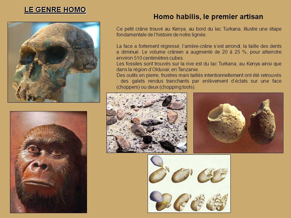 Homo habilis, le premier artisan