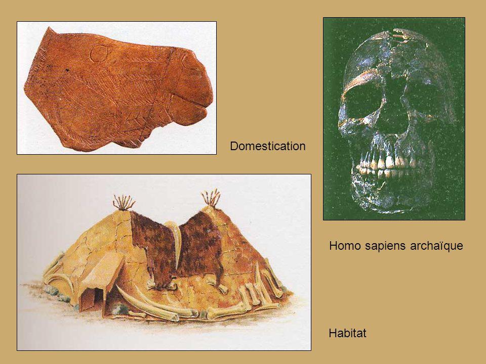Domestication Homo sapiens archaïque Habitat