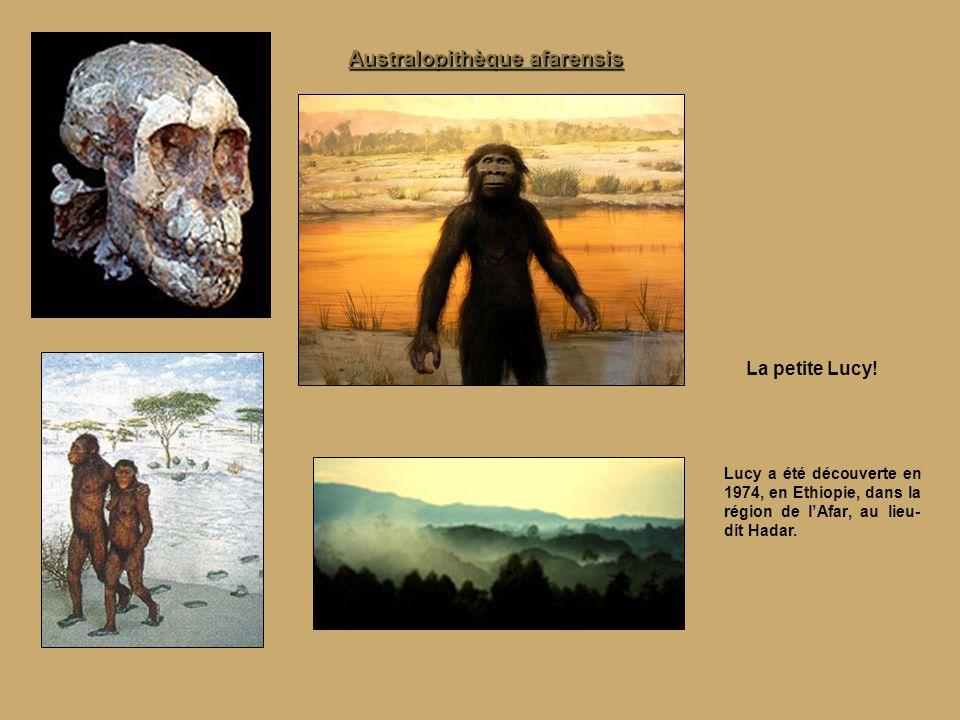 Australopithèque afarensis