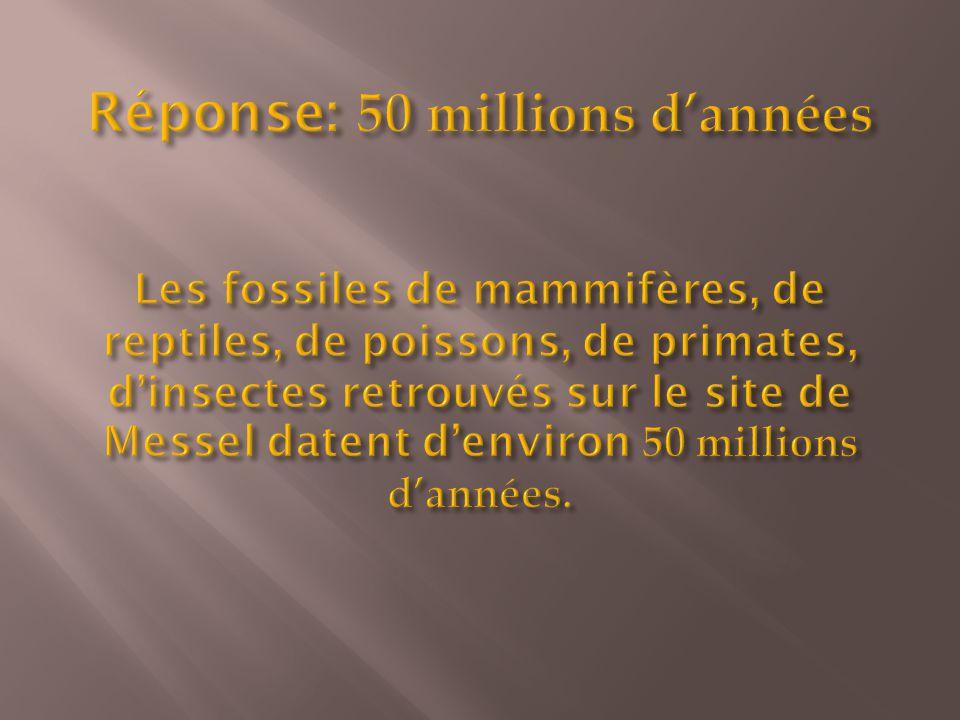 Réponse: 50 millions d'années Les fossiles de mammifères, de reptiles, de poissons, de primates, d'insectes retrouvés sur le site de Messel datent d'environ 50 millions d'années.