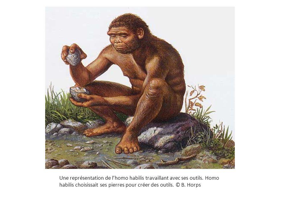 Une représentation de l'homo habilis travaillant avec ses outils