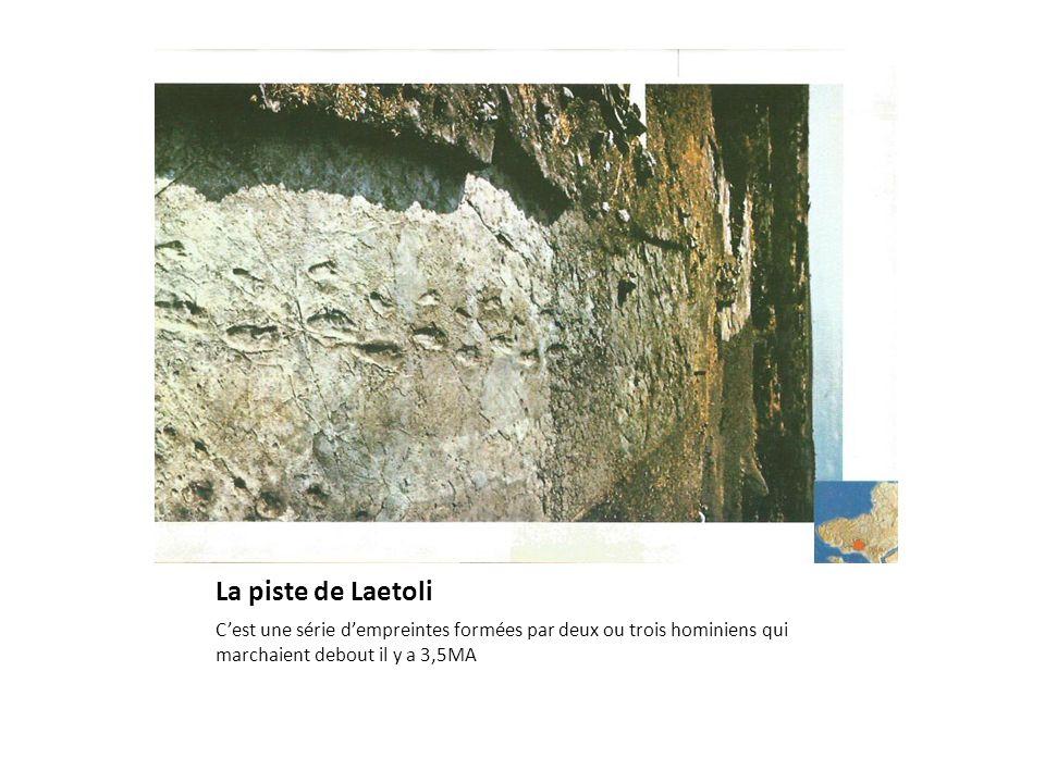 La piste de Laetoli C'est une série d'empreintes formées par deux ou trois hominiens qui marchaient debout il y a 3,5MA.