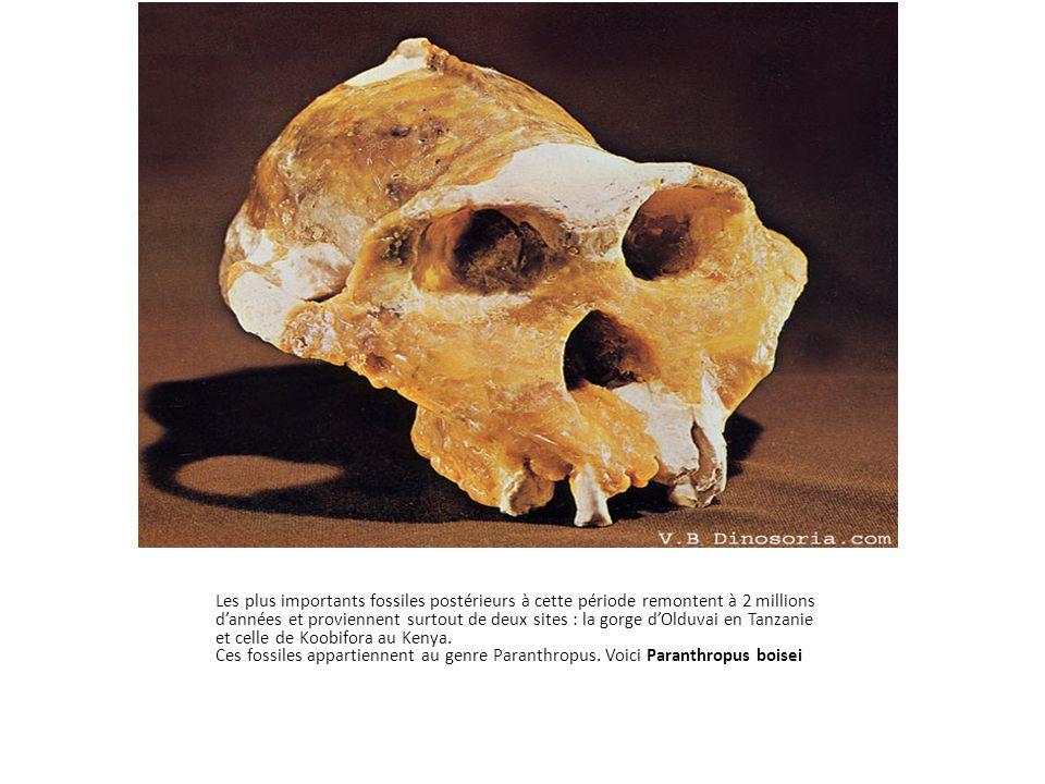 Les plus importants fossiles postérieurs à cette période remontent à 2 millions d'années et proviennent surtout de deux sites : la gorge d'Olduvai en Tanzanie et celle de Koobifora au Kenya.