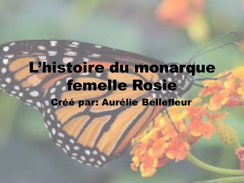 L'histoire du monarque femelle Rosie