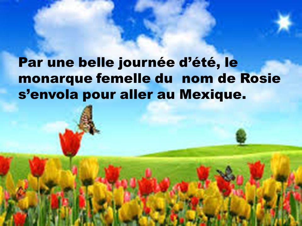 Par une belle journée d'été, le monarque femelle du nom de Rosie s'envola pour aller au Mexique.