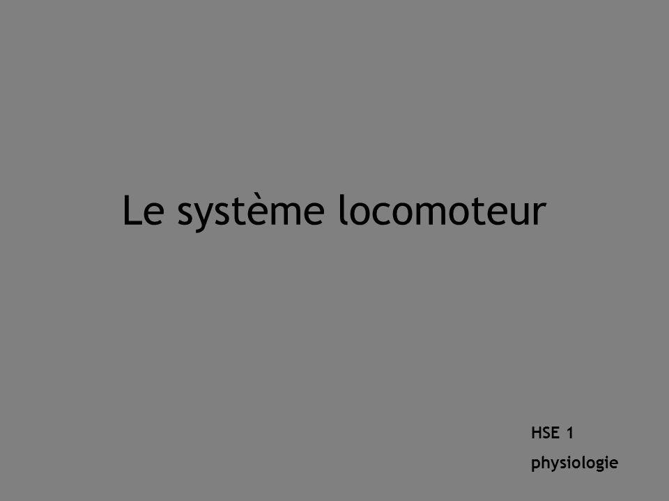 Le système locomoteur HSE 1 physiologie