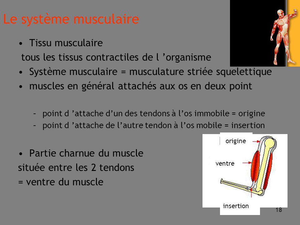 Le système musculaire Tissu musculaire
