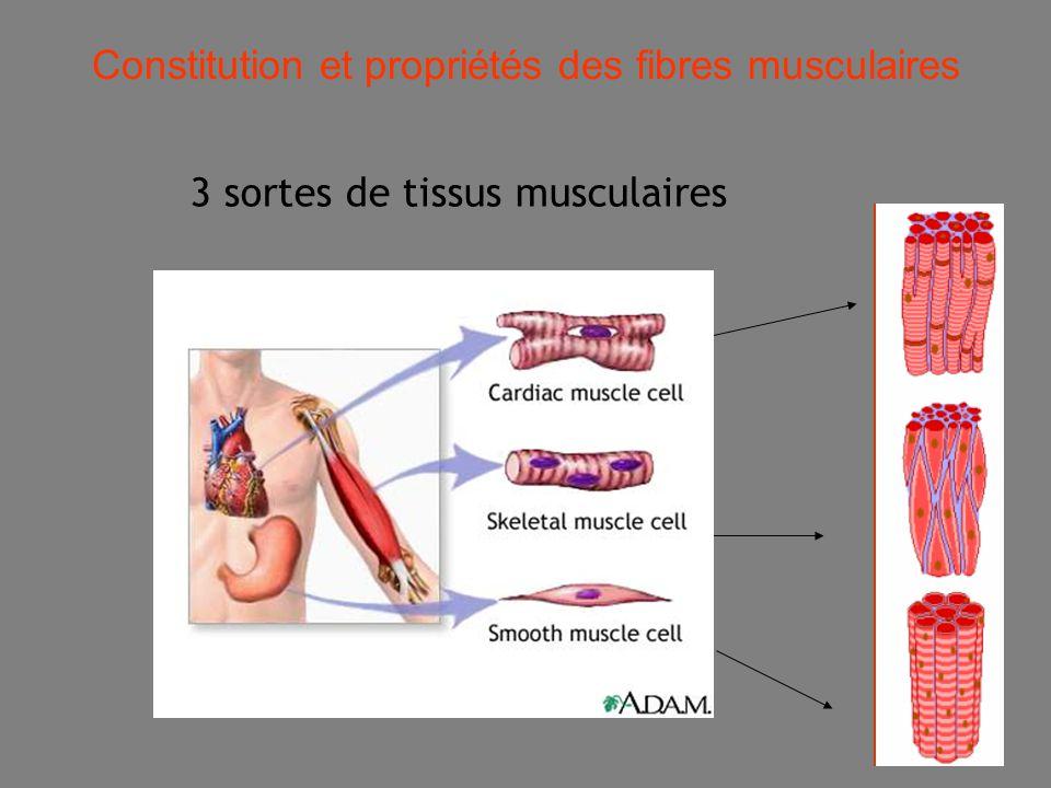 Constitution et propriétés des fibres musculaires