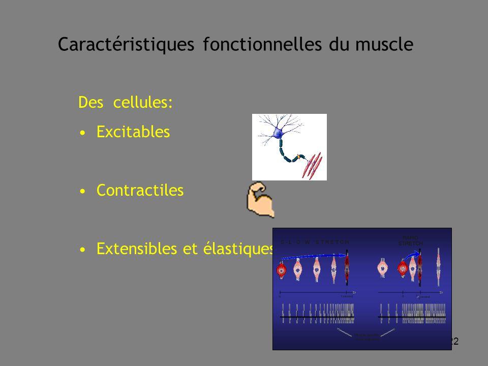 Caractéristiques fonctionnelles du muscle