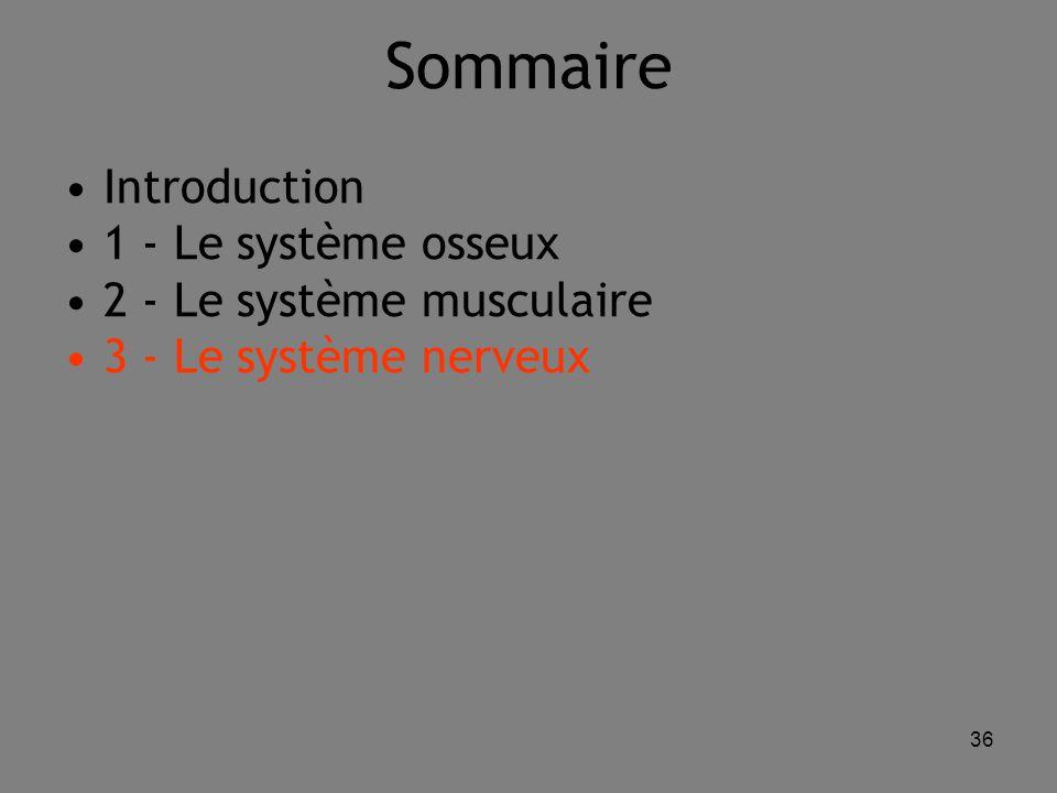Sommaire Introduction 1 - Le système osseux 2 - Le système musculaire