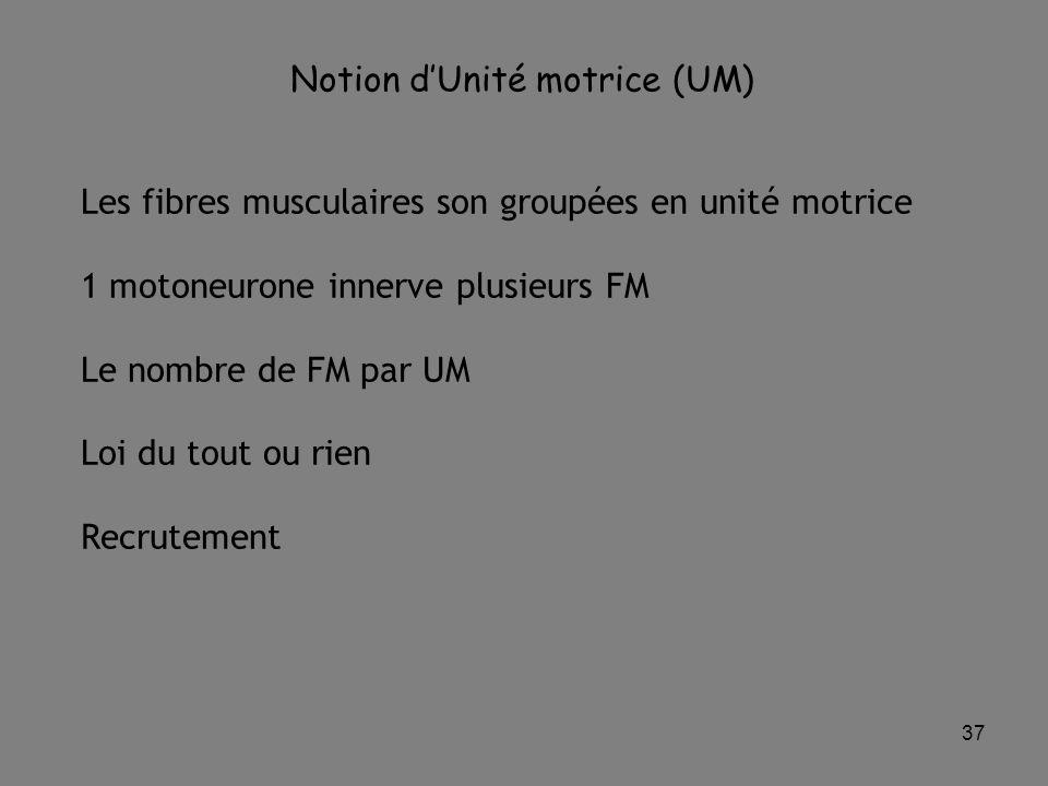 Notion d'Unité motrice (UM)