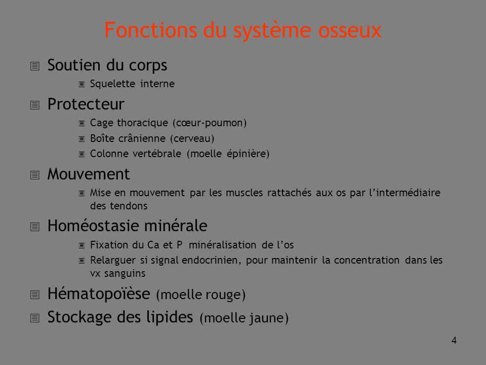 Fonctions du système osseux