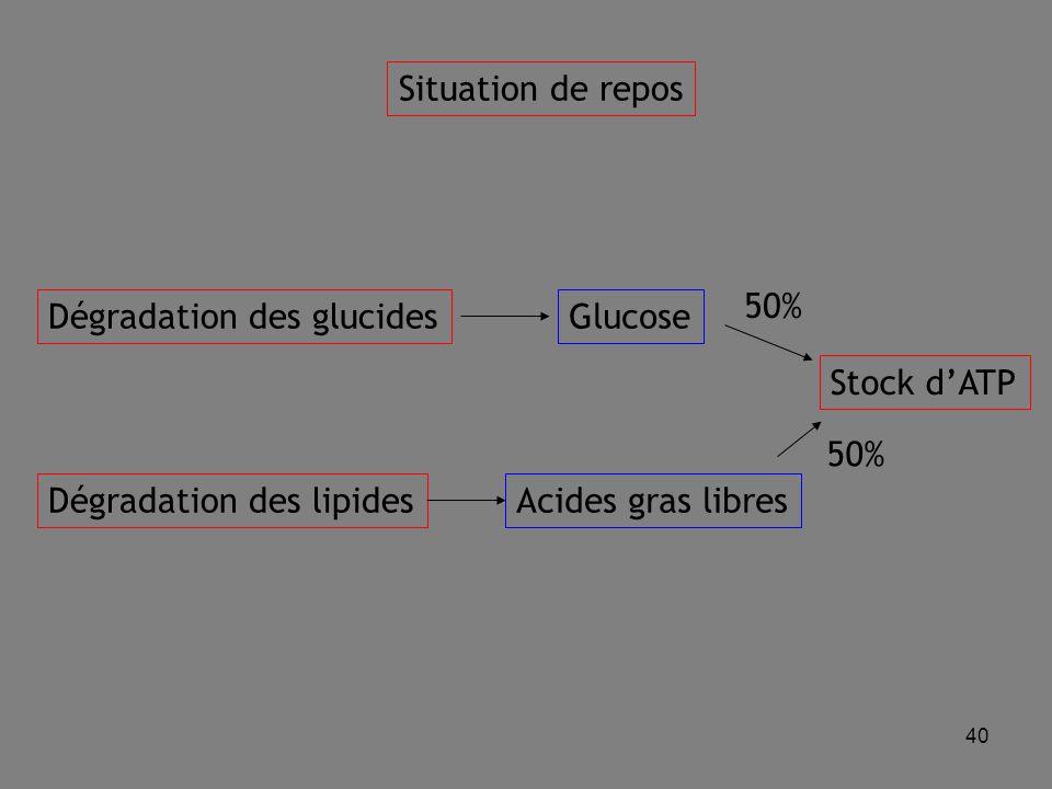 Situation de repos 50% Dégradation des glucides. Glucose. Stock d'ATP. 50% Dégradation des lipides.