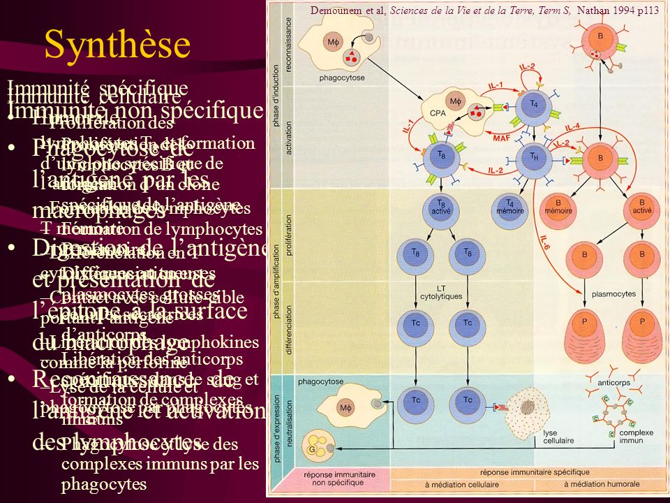 Synthèse Immunité non spécifique
