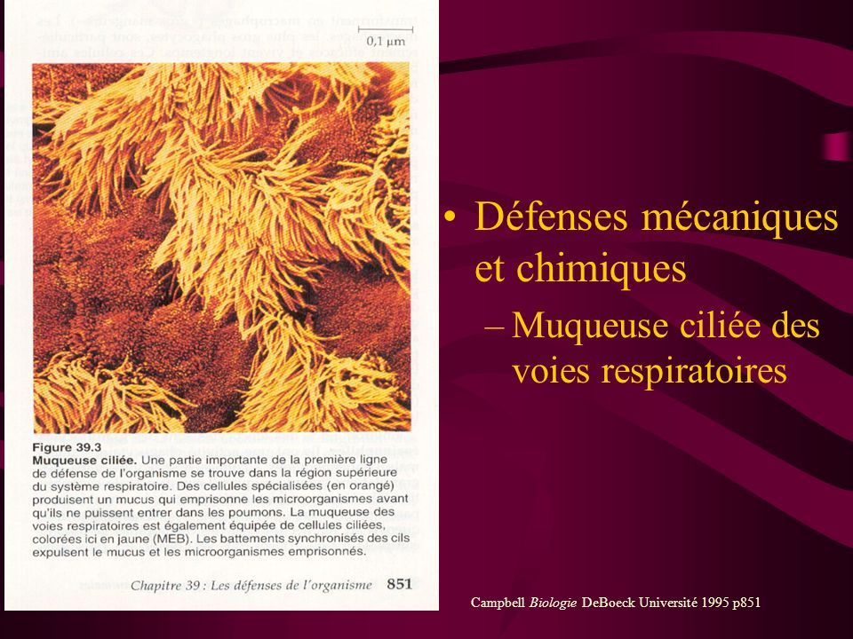 Défenses mécaniques et chimiques