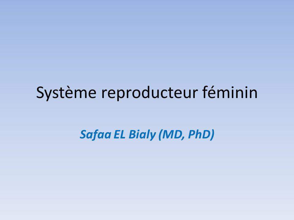 Système reproducteur féminin