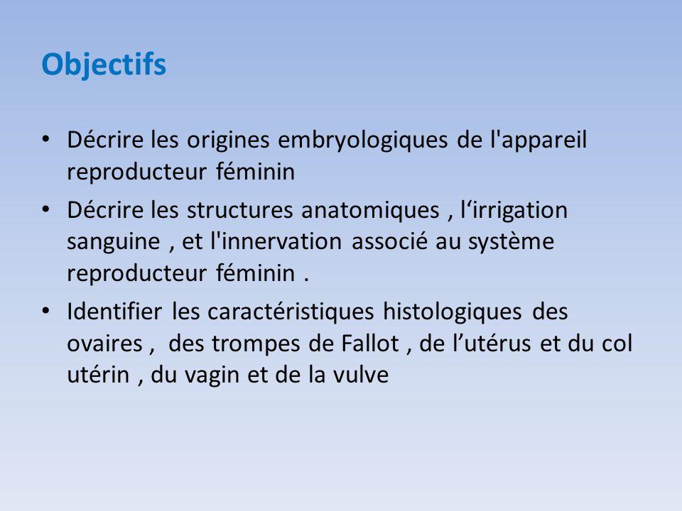 Objectifs Décrire les origines embryologiques de l appareil reproducteur féminin.