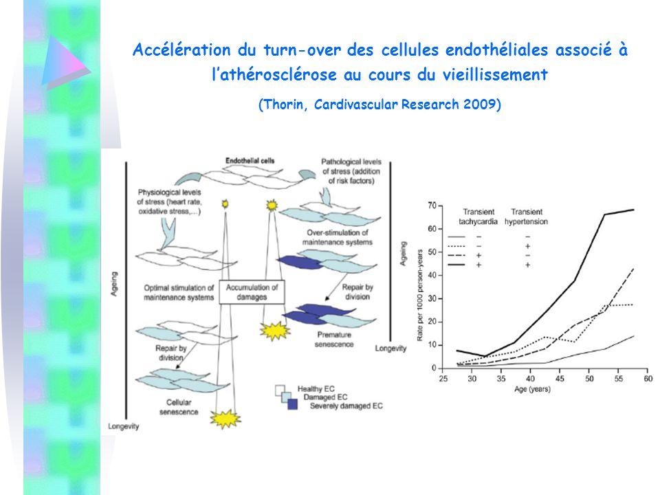 Accélération du turn-over des cellules endothéliales associé à l'athérosclérose au cours du vieillissement (Thorin, Cardivascular Research 2009)