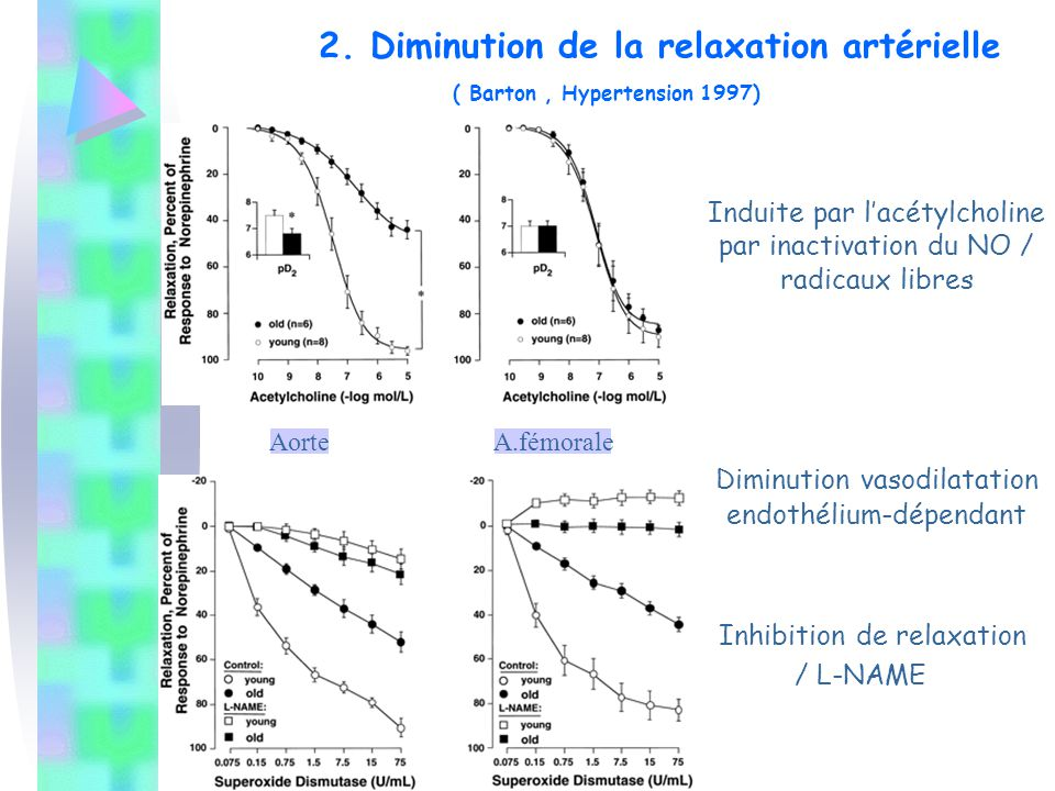 Induite par l'acétylcholine par inactivation du NO / radicaux libres