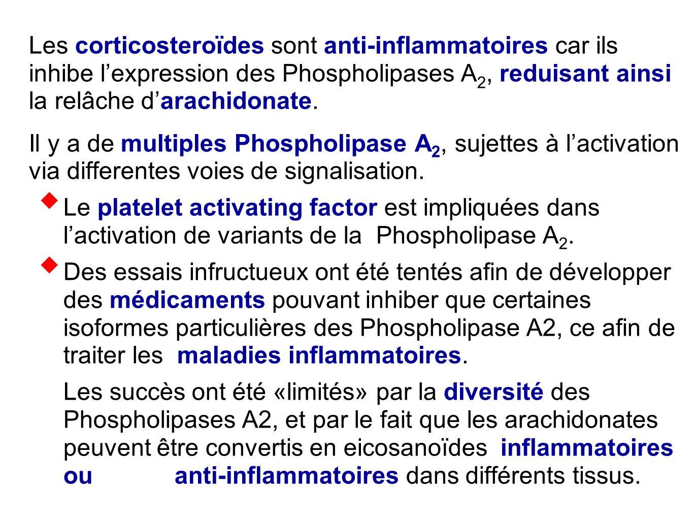 Les corticosteroïdes sont anti-inflammatoires car ils inhibe l'expression des Phospholipases A2, reduisant ainsi la relâche d'arachidonate.