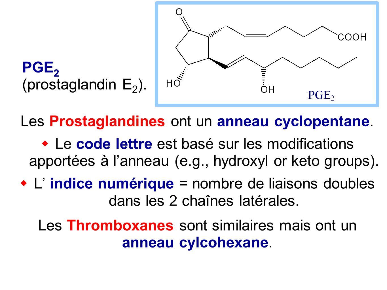 Les Prostaglandines ont un anneau cyclopentane.