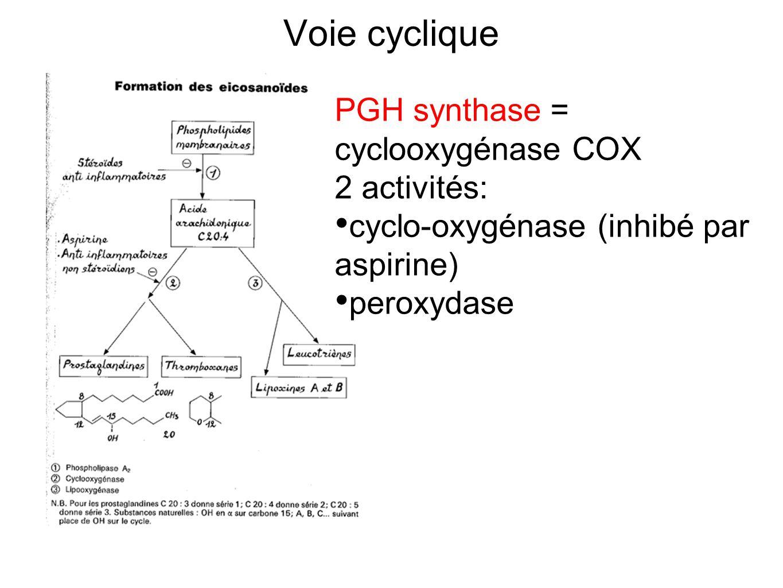 Voie cyclique PGH synthase = cyclooxygénase COX 2 activités: