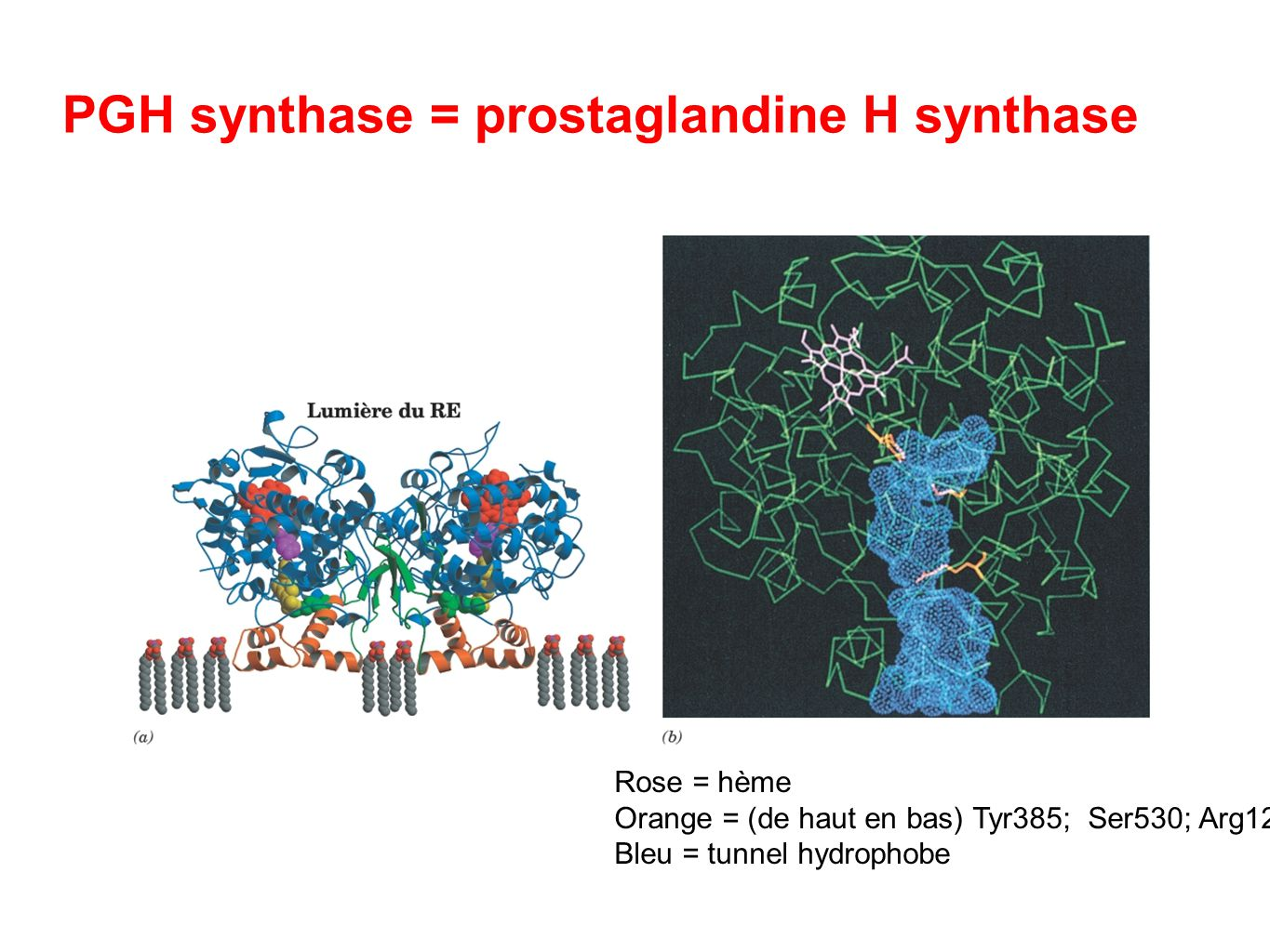 PGH synthase = prostaglandine H synthase