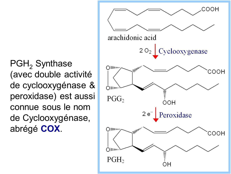 PGH2 Synthase (avec double activité de cyclooxygénase & peroxidase) est aussi connue sous le nom de Cyclooxygénase, abrégé COX.