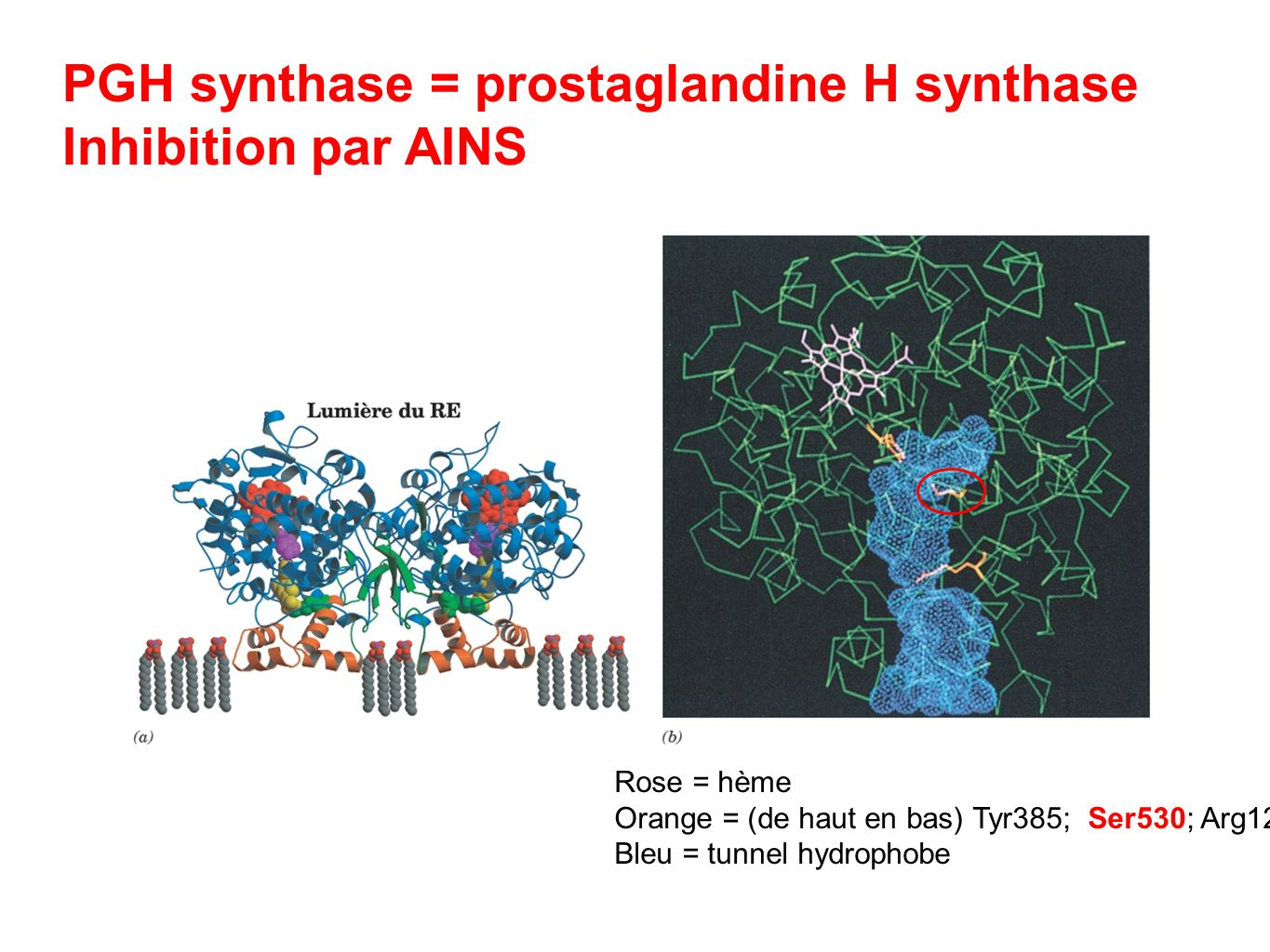 PGH synthase = prostaglandine H synthase Inhibition par AINS