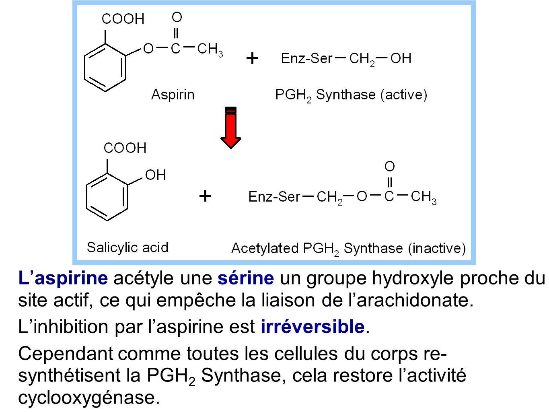 L'aspirine acétyle une sérine un groupe hydroxyle proche du site actif, ce qui empêche la liaison de l'arachidonate.