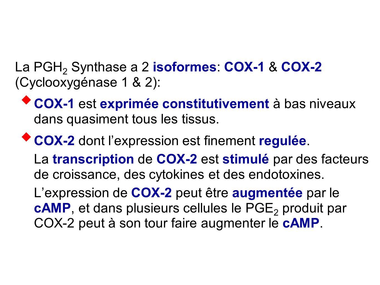 La PGH2 Synthase a 2 isoformes: COX-1 & COX-2 (Cyclooxygénase 1 & 2):