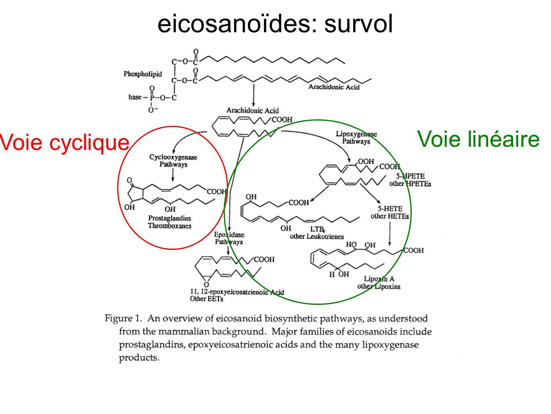 eicosanoïdes: survol Voie linéaire Voie cyclique