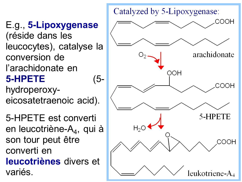 E.g., 5-Lipoxygenase (réside dans les leucocytes), catalyse la conversion de l'arachidonate en 5-HPETE (5- hydroperoxy- eicosatetraenoic acid).